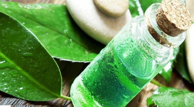 tea tree oil is the best warts removal